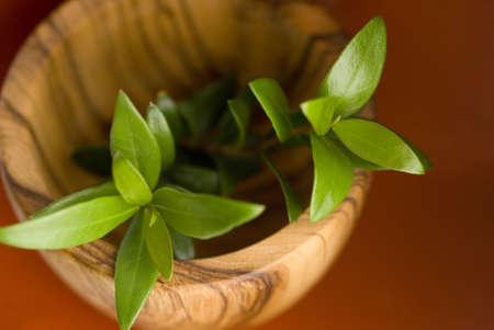 enebro: ramas de enebro en un recipiente de madera de olivo