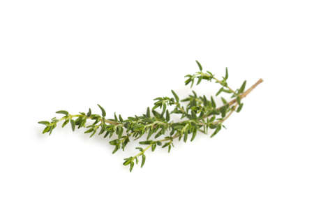 fresh thyme branch isolated on white background