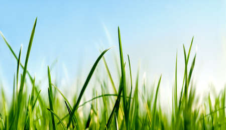 grass close to the ground view Stock Photo - 2797180
