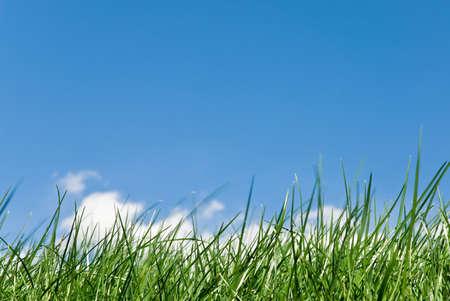 clearness: grassy skyline