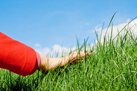 child hand caressing the grassy surface photo