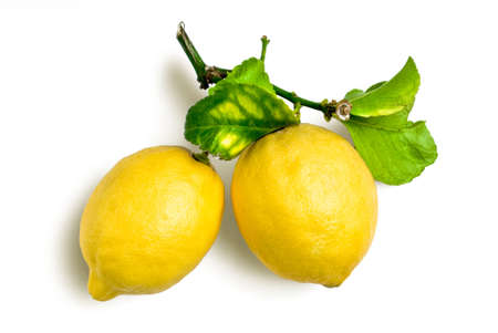 sourness: lemons with spray and leafs from organic farming