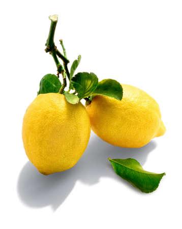 sourness: lemons from organic farming