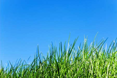grass against sky photo