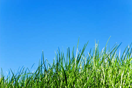 clearness: grass against sky
