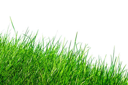 clearness: blades of grass isolated