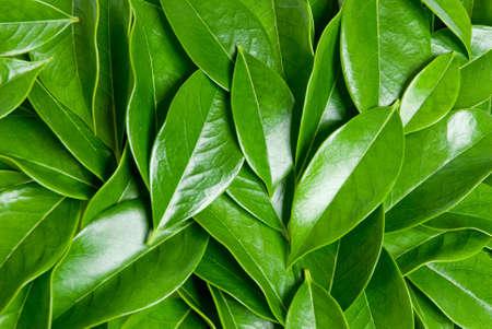 heaped: closeup of green leaves heap