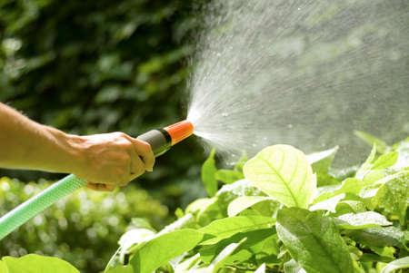 regando plantas: femenino mano riego las plantas con una manguera sprayng