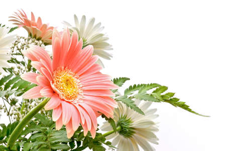 composition of Gerbera flowers with delicate colours photo