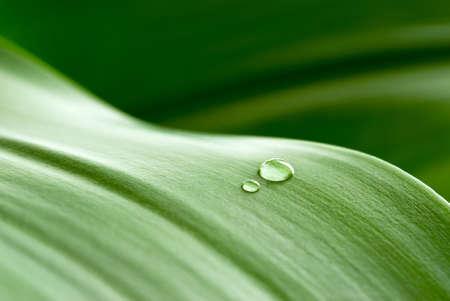 cristal clear drops on a green leaf