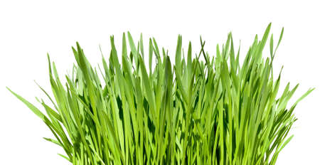 tuft of grass isolated over white background