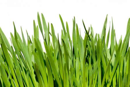 Gras über weißen Hintergrund isoliert Lizenzfreie Bilder