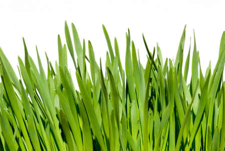 herbage: grass isolated over white background Stock Photo