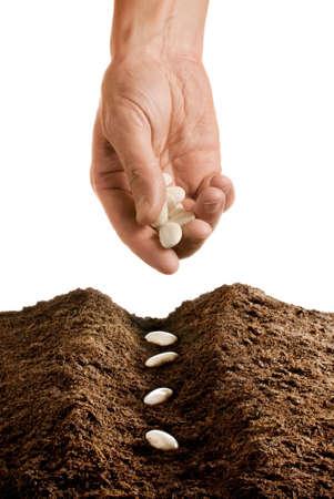 sementi: mano seeding isolato su sfondo bianco Archivio Fotografico