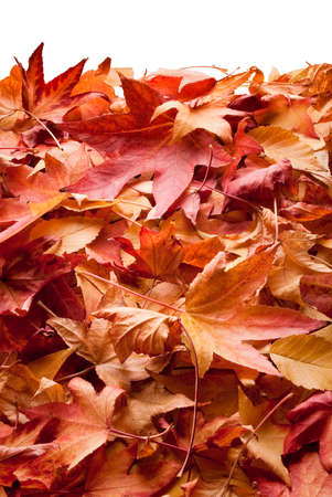 underbrush: colourful carpet of dried leafs in autumn