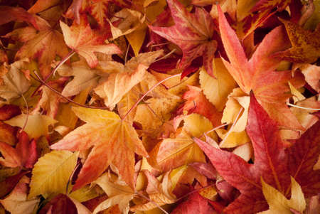colourful carpet of dried leafs in autumn photo