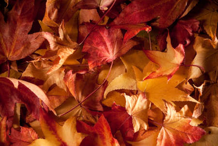 bunten Teppich von getrocknete Blätter im Herbst Lizenzfreie Bilder