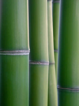 restful: close up of green bamboo reeds