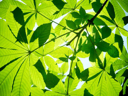 fronds with green leafs in backlight