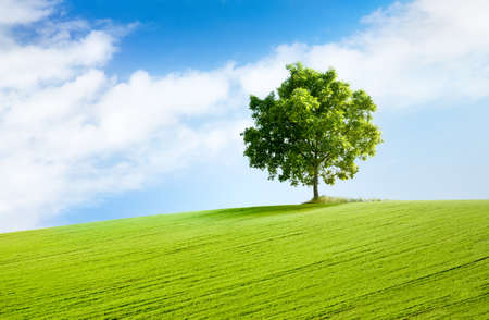 solitary tree on grassy hill and blue sky with clouds in the background photo