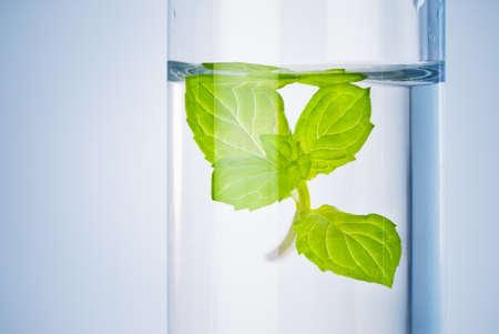 bioresearch Reagenzglas mit grüner Spross in flüssiger Lösung Lizenzfreie Bilder