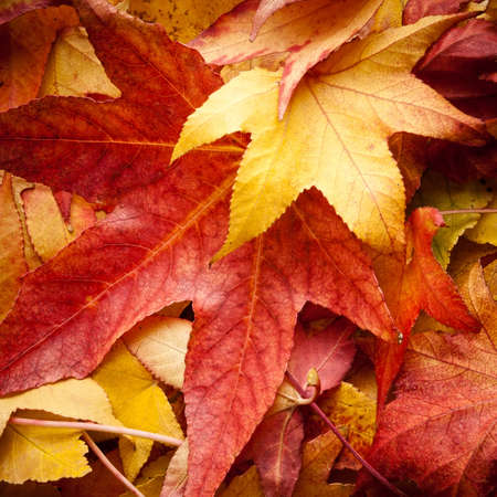 backcloth: detali of colourful dried leafs in autumn Stock Photo