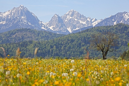 Green grassland  and mountains in bavaria photo