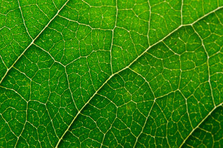 Green leaf with structure, macro