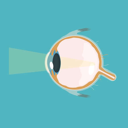 Vector structure eye look cutaway vector illustration Illustration