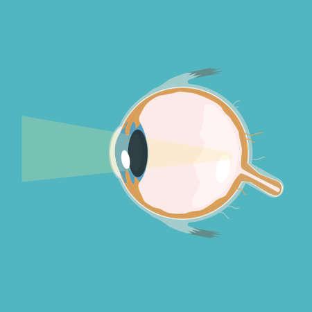 Vector structure eye look cutaway vector illustration Ilustração