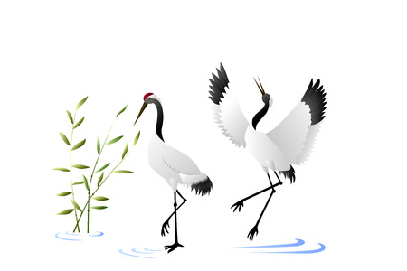 Birds crane nature illustration vector