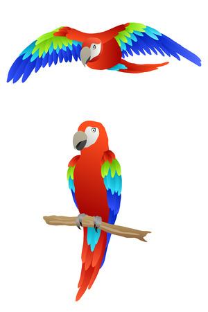papagayo: Loro del p�jaro guacamayo rojo verde azul aislado ilustraci�n vectorial