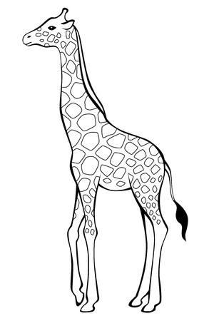 Giraffe zwart wit geïsoleerde illustratie
