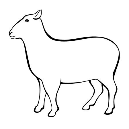 black and white: Sheep black white isolated illustration