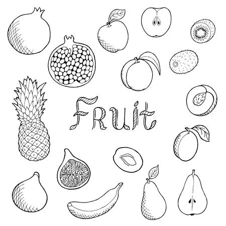 alfa: Fruit food graphic art set black white isolated illustration vector Illustration