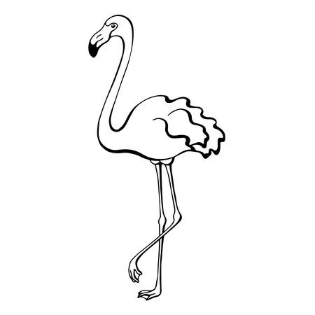 flamenco ave: P�jaro del flamenco negro Bosquejo blanco aislado Ilustraci�n