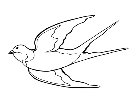 swallow bird: Swallow bird black white isolated sketch illustration vector Illustration