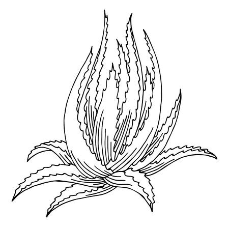 알로에 베라 그래픽 아트 검은 흰색 격리 된 그림 벡터