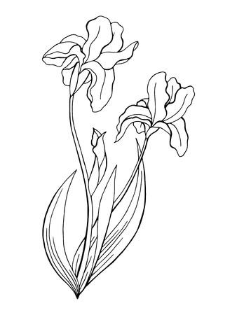 Iris bloem grafische kunst zwart wit geïsoleerde illustratie vector