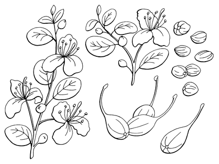 Capers graphic black white isolated sketch illustration vector Ilustração