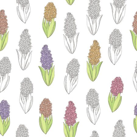 히아신스 꽃 색상 그래픽 원활한 패턴 스케치 일러스트 벡터