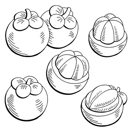 Mangosteen Fruit Graphic Black White Isolated Sketch Illustration