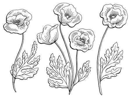 ケシの花グラフィック黒白い分離スケッチ イラスト  イラスト・ベクター素材