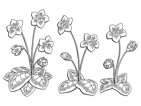 Violet flower graphic black and white isolated sketch illustration vector
