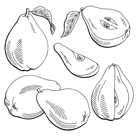 Quince fruit graphic black and white isolated sketch illustration vector