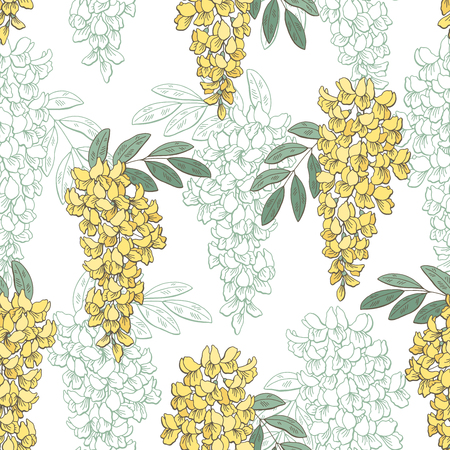 Acacia flower color graphic seamless pattern sketch illustration vector Illustration