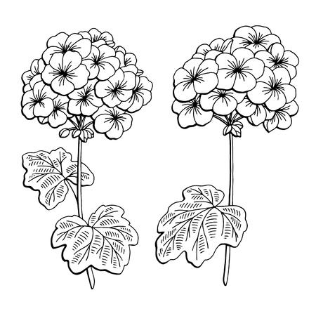 Geranium flower graphic black white isolated sketch illustration vector Vectores