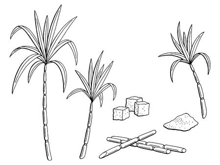 Suikerriet grafische schets Stock Illustratie