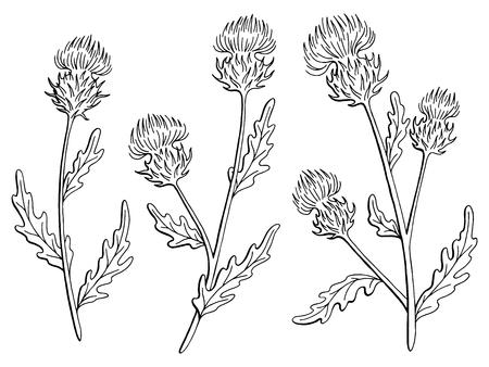 Distel bloem grafische zwart-wit geïsoleerde schets vectorillustratie.