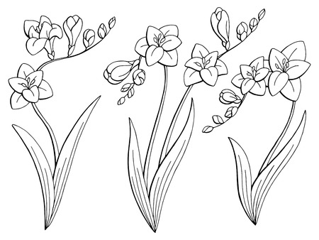 Freesia flower graphic black and white. Isolated sketch set vector illustration.